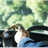 偏光サングラスで運転が快適になる?値段の違いは?色の選び方は?