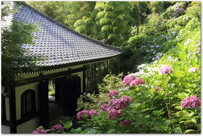 あじさいが咲く頃の鎌倉長谷寺