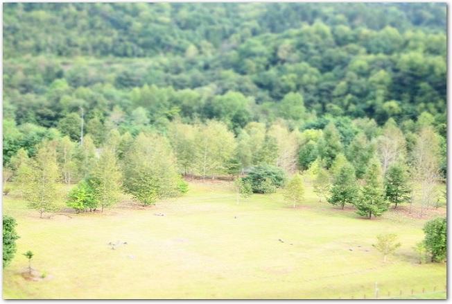 ジオラマのベースにする緑の木々