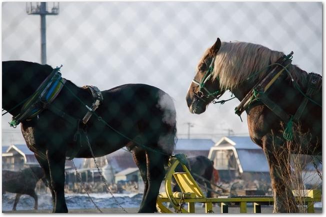 馬そりを曳いた2頭のばん馬が立っている様子