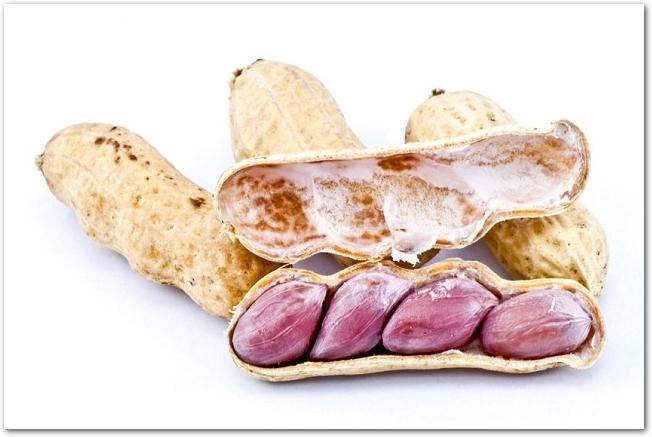 白背景に置かれた殻付きの茹でピーナッツ